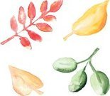 Hand Colored,Yellow,Leaf,Autumn,Watercolor Painting,Illustration,Textured,No People,Orange Leaves,Hand Painting