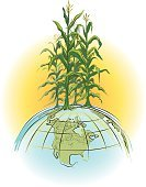 Corn - Crop,Food,Agriculture,Globe - Man Made Object,Earth,World Map,Cereal Plant,Crop,Sun,Planet - Space,Concepts,Ilustration,Clip Art,Isolated,Symbol,Vector,Plant,World Grain,No People,Industry,Concepts And Ideas,Illustrations And Vector Art,Color Image,White,Vertical,Agriculture