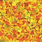 Autumn,Leaf,Backgrounds,Seamless,Pattern,Complexity,Repetition,Vector,Maple Leaf,Textured,Green Color,Season,Computer Graphic,Nature,Wallpaper Pattern,Continuity,Digitally Generated Image,Orange Color,Yellow,Connection,Red,Link,Bright,Vibrant Color,Plant,Design,Illustrations And Vector Art,Arts And Entertainment,autumn leaves,Nature,Design Element,Nature Backgrounds,Arts Backgrounds,Vector Backgrounds,Ilustration
