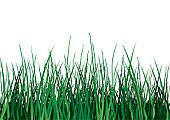 Blade of Grass,Grass,Plain,Lawn,Landscape,Residential District,Nature,Backgrounds,White,Idyllic,Steppe,Rural Scene,Pasture,Isolated,Meadow,Scenics,Field,Vector,Realism,Leaf,Horizon Over Land,Green Color,Land,Ilustration,Simplicity,Tranquil Scene,Beauty In Nature,Growth,Nature,Summer,Non-Urban Scene,Vibrant Color,Plants,Vector Florals,Plant,Illustrations And Vector Art,Front View,Landscapes,Outdoors