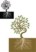 Root,Tree,Branch,Plant,Symbol,Religious Icon,Leaf,Plants,Nature,Nature,Environment,Illustrations And Vector Art