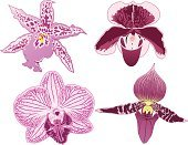 Orchid,Ilustration,Vector,Moth Orchid,Purple,Flower,Single Object,Isolated,Design,Flower Head,Plant,Decoration,Nature,Beauty In Nature,Botany,Pink Color,Flowers,Vector Ornaments,Nature,Vector Florals,Color Image,Ornate,Petal,Illustrations And Vector Art
