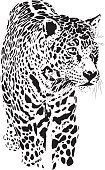 Human Body Part,Human Face,Africa,Hunting,Animals Hunting,Ink,Black Color,White Color,Spotted,Feline,Leopard,Fine Art Portrait,Illustration,Sketch,Vector,2015