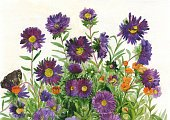 Watercolor Painting,Purple,Bud,Petal,Bouquet,Yellow,Single Flower,Plant Stem,Leaf,Plant,Flower,Aster,Horizontal,Butterfly - Insect,Photography,Bush,Field Marigold,Brown,2015,No People