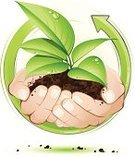 Plant,Human Hand,Seedling,Dirt,Water,Sapling,Growth,Environment,Recycling,Green Color,Arrow Symbol,Vector,Environmental Conservation,Leaf,Concepts,New Life,Drop,Creativity,Ideas,Plants,Nature,Nature,Nature Symbols/Metaphors,Illustrations And Vector Art,Land,Stem,Inspiration,Vector Florals