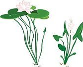 No People,Flower,Plant,Animal,Herb,Bush,Petal,Water Lily,Arrowhead Flower,Water Plant,Ecosystem,Cartoon,Aquatic,Horticulture,Illustration,Nature,Leaf,Flower Head,2015,Swan,Cygnet,Bird,Botany,Gardening,Water,Lifestyles,Vector,Drawing - Art Product,Group Of Objects,Lotus Water Lily,White Color,Green Color