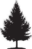 Tree,Pine Tree,Fir Tree,Vector,Silhouette,Spruce Tree,Coniferous Tree,Forest,Black Color,Larch Tree,Branch,Ilustration,Isolated,Shape,Tall,Nature,Loneliness,Leaf,New Year's Day,Single Object,One Person,Design Element,Art,Large,Land,New Year's Eve,Solitude,Painted Image,Dingbat,New Year
