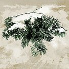 Square,Humor,Retro Styled,Computer Graphics,Craft,Art And Craft,Sketch,Art,Christmas,Monochrome,Snowflake,Illustration,Nature,Ink,Pinaceae,2015,Fir Tree,Winter,Computer Graphic,Christmas Tree,Decoration,Drawing - Activity,Forest,Monochrome,Season,Branch,Backgrounds,Snow,Photography,Christmas Ornament,Pencil Drawing,Pine Tree,Tree,Drawing - Art Product,Spruce Tree,Textured