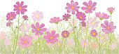 Wildflower,Cosmos Flower,Flower,Pink Color,Ilustration,Backgrounds,Green Color,Tangled,Gardens,Nature Backgrounds,Flowers,Nature,Plant,Growth