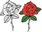 Rose - Flower,Sketch,Single Flower,Thorn,Flower,Leaf,Red,Intricacy,Seduction,Concepts And Ideas