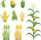 Corn,Soybean,Corn - Crop,Wheat,Agriculture,Farm,Cereal Plant,Computer Icon,Crop,Vector,Vegetable,Field,Ilustration,Clip Art,Green Color,Plant,Set,Posing,Gold Colored,Yellow,No People,Color Image