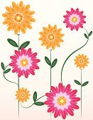 Flower,Chrysanthemum,Single Flower,Daisy,Pink Color,Gardening,Backgrounds,Pattern,Cheerful,Orange Color,Green Color,Design,Daisy Family,Leaf,Happiness,Springtime,Summer