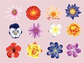 Flower Head,Carnation,Flower,Daisy,Ilustration,Petal,Rose - Flower,Multi Colored,Collection,Plant,Group of Objects,Nature,Flowers,Nature