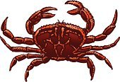 Crab,Cancer - Astrology Sign,Vector,Crustacean,Ilustration,Red,Claw,Sea Life,Meat And Alternatives,Illustrations And Vector Art,Food And Drink,Orange Color,Isolated,Animals And Pets