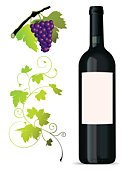 Wine,Wine Bottle,Vine,Grape,Label,Packaging,Vector,Leaf,Branding,Autumn,Plant,Alcohol,Red Wine,Winemaking,Harvesting,Blank,Cabernet Sauvignon Grape,Agriculture,Merchandise,Branch,Season,White Riesling Grape,Ornate,Nature,Alcohol,Food And Drink,Industry,Plants,Agriculture,Rose Wine