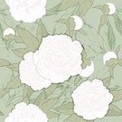 Elegance,Retro Styled,No People,Flower,Ornate,Petal,Summer,Illustration,Leaf,2015,Peony,Seamless Pattern,Decoration,French Culture,Backgrounds,Vector,Pattern,White Color