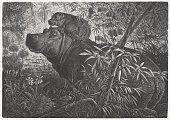Wood Engraving,Horizontal,Africa,No People,African,Plant,Woodcut,Outdoors,Animal Wildlife,Animal,River,Tropical Rainforest,Animal Themes,Mammal,Coastal Feature,Animals In The Wild,Nature,2015,African-American Ethnicity,Hippopotamus,Young Animal,Etching,Engraving,Beach,Photography,Cub