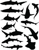 Shark,Silhouette,Great White Shark,Underwater,Animal Fin,Vector,Sea,Danger,Reef Shark,Fear,Dorsal Fin,Illustrations And Vector Art,Wild Animals,Sea Life,Animals And Pets,ocean life,Sharp,Nature,Tail Fin,Swimming Animal