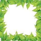 81352,268399,Frame,Square,Freshness,No People,Bush,Flower,Tropical Climate,Plant,Bush,Ornate,Empty,Tropical Rainforest,Collection,Illustration,Nature,Shape,Leaf,Isolated,Aubusson,Space,Decoration,Botany,Environment,Forest,Formal Garden,Vector,Single Object,Design,Drawing - Art Product,Empty,Pattern,White Color,Design Element,Green Color