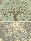 Root,Tree,Grunge,Oak Tree,Vector,Nature,Growth,Winter,Deciduous Tree,Plant,Damaged,Distressed,Textured Effect