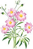 Single Flower,Flower,Daisy,Cosmos Flower,Vector,Gerbera Daisy,Floral Pattern,Anemone Flower,Pink Color,Computer Graphic,Chamomile Plant,Botany,Springtime,Isolated,Stem,Chamomile,Clip Art,Flower Head,Design Element,Plant,Single Object,Frame,Petal,White,Summer,Green Color,Leaf,Cut Out,Color Image,Twig,Nature,Macro,Isolated On White,Backgrounds,White Background,Nature,Vector Florals,Abstract,Ideas,Beautiful,Concepts,Flowers,No People,Vertical,Beauty In Nature,Illustrations And Vector Art,Close-up,Multi Colored,Pattern,Outdoors,Image