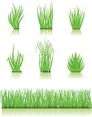 Grass,Blade of Grass,Lawn,Vector,Front or Back Yard,Turf,Green Color,Plant,Environment,Field,Summer,Meadow,Playing Field,Nature,Isolated,White Background,Nature,Illustrations And Vector Art,Isolated On White,grass field