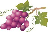 Grape,Grape Leaf,Leaf,Vine,Vector,Fruit,Ilustration,Beaujolais Region,Red Wine,Agriculture,Berry Fruit,Design Element,Merlot Grape,Winemaking,Food,Healthy Eating,Cabernet Sauvignon Grape,Rioja,Decor,Bordeaux,Purple,Ornate,Freshness,Green Color,Remote,Blue,green isolated,Hill,vector illustration,Food And Drink,Alcohol