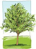 Tree,Park - Man Made Space,Drawing - Art Product,Watercolor Painting,Nature,Green Color,Pencil Drawing,Healthy Lifestyle,Ilustration,Branch,Freedom,Leisure Activity,Grass Area,Color Image,Sky,Blue,Air,No People,Outdoors,Vertical,Freshness,Plant,Plants,Nature,Landscapes,Nature Backgrounds