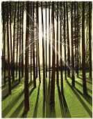 Forest,Tree,Woodland,Sun,Wood - Material,Tree Trunk,Drawing - Art Product,Green Color,Ilustration,Nature,Sunlight,Drawing - Activity,Grass,Pencil Drawing,Nature Abstract,Nature Backgrounds,Plants,Nature