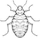 Bedbug,Insect,Black And White,Ilustration,Vector,Pencil Drawing,Engraved Image,Insects,Illustrations And Vector Art,Animal,No People,Animals And Pets