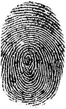 Fingerprint,Pattern,Crime,Swirl,Ink,Individuality,Human Finger,Thumb,Life,People,Grunge,Identity,Characters,indentification,Illustrations And Vector Art