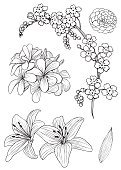 Cut Out,Elegance,Retro Styled,Black And White,Camellia,Flower,Lily,Line Art,Sketch,Plant,Doodle,Wedding,Beauty,Old-fashioned,Wallpaper,Ornate,Flowerbed,Pen And Ink,Beautiful People,Summer,Illustration,Nature,Leaf,Flower Head,Forget-Me-Not,Frangipani,Single Flower,Outline,Botany,Branch,Backgrounds,Ornamental Garden,Blossom,Formal Garden,Pencil Drawing,Beauty In Nature,Vector,Springtime,Drawing - Art Product,Pattern,Floral Pattern,White Background