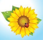 Sunflower,Ladybug,Vector,Flower Bed,Single Flower,Flower,Isolated,Summer,Vegetable,Seed,Yellow,Leaf,Pollen,Petal,Nature,Agriculture,Single Object,Ilustration,Sunlight,Plant,Blue,Springtime,Botany,Backgrounds,Red,Photo-Realism,Sky,Decoration,Green Color,Drop,Illustrations And Vector Art,Nature,Gold Colored,Summer,No People,Vibrant Color,Flowers,Beauty In Nature