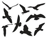 Silhouette,Background,Animal Wildlife,Animal,Sea,Seagull,Collection,Illustration,Nature,Symbol,Group Of Animals,Flying,Isolated,Bird,Backgrounds,Vector,White Color,Black Color