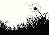 Dandelion,Change,Blowing,Silhouette,Grass,Seed,Close-up,Lawn,Backgrounds,Vector,Back Lit,Blade of Grass,Wind,Ilustration,Turf,Meadow,Summer,Plant,Flowing,Freshness,Nature,Plants,Backdrop,Nature Symbols/Metaphors,Illustrations And Vector Art,Outdoors,Vector Backgrounds,Nature
