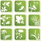 Plant,Vine,Herbal Medicine,Symbol,Flower,Grape Leaf,Leaf,Silhouette,Computer Icon,Grape,Single Flower,Icon Set,Summer,Vector,Floral Pattern,Backgrounds,Green Color,Sign,Berry,Iris,Growth,Valerian,Nature,Cherry,Ilustration,Design,Berry Fruit,Creeper Plant,Bud,Design Element,Springtime,American Arborvitae,Shadow,Natural Pattern,Label,Square Shape,Beauty In Nature,Clip Art,Color Image,Ornate,Lush Foliage,Season,Collection,Concepts,Brambleberry