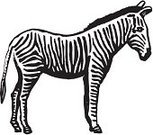 Zebra,Ilustration,Vector,Pen And Ink,Black And White,Mammal,Drawing - Art Product,Wildlife,Animal,zoo animal,hand drawn,Hoofed Mammal,Horse Family,african animal