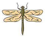 No People,Summer,Illustration,Nature,Dragonfly,Insect,Watercolor Paints,Vector