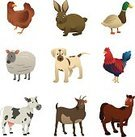 Animal,Farm,Sheep,Drawing - Art Product,Clip Art,Modern,Illustration,Chicken - Bird,Rabbit - Animal,Puppy,Design Element,Isolated,Vector,Horse,White Background,Hen,Goat,Cow,Rooster,Duck,Dog,Symbol