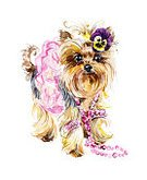 Love,Dog,Bizarre,Puppy,Pattern,Violet,Dress,Fur,hand drawn,Animal Hair,Paint,Illustration,Bow,Small,Ornate,Pink Color,Terrier,Purple,Shaggy,Young Animal,Mammal,Animal,Single Flower,Painted Image,Pets,Isolated,Yorkshire,Nature,Romance,lovable,Watercolor Painting,Composition,Skirt