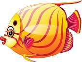 Animated Cartoon,Cartoon,Tropical Climate,Cute,Animal,Animal Fin,Gold,Vector,Characters,Underwater,Nature,Happiness,Wildlife,Backgrounds,Clown Fish,Elegance,Looking,Fish,Human Lips,Remote,Clown,Aquatic Mammal,Isolated,Mascot,Sea,Smiling,Symbol,Swimming Animal,Yellow,Water,golden fish,Cheerful,Gold Colored,Gesturing,Illustration,Waving,Orange Color