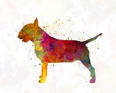 Bull - Animal,English Bull Terrier,Illustration,Watercolor Painting,Dog,Bull Terrier,Terrier,Painted Image