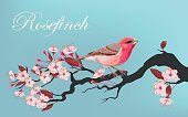 Computer Graphics,Freshness,Nature,Close-up,Plant,Animal Markings,Bird,Pink Color,Red,Pattern,Flower,Tree,Plant Stem,Branch,Leaf,Season,Flower Head,Petal,Springtime,Summer,Cherry,Beauty,Computer Graphic,Cut Out,Cherry Blossom,Blossom,Illustration,Beauty In Nature,Group Of Animals,Vector,Beautiful People,bird-cherry