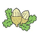 Bizarre,Nature,Drawing - Activity,Cultures,Seed,Acorn,Cute,Illustration,Doodle,Vector,Freehand,Clip Art
