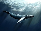 Whale,Humpback Whale,Paintings,Ilustration,Sea,Painted Image,Wildlife,Mammal,Nature,Extreme Terrain,Sea Life,Animals And Pets