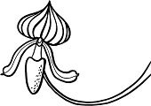 Orchid,Lady's Slipper,Plant,Vector Icons,Flowers,Line Art,Illustrations And Vector Art,Nature