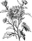 Flower,Single Flower,Engraving,Woodcut,Aster,Black Color,Engraved Image,White,Plant,Retro Revival,Tree,Vector,Leaf,Branch,Design,Old,Art,Ilustration,Ornate,Oriental Style Woodblock Art,Design Element,Variation,Craft,Nature,East Asian Culture,Backgrounds,Exoticism,Luxury,Isolated,East Asia,Decoration,Elegance,Curled Up,Beauty,Asia,Beauty In Nature,Homemade,Arts And Entertainment,Illustrations And Vector Art,Art Product,Nostalgia,accent,Nature