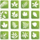 Fern,Grape Leaf,Chestnut Tree,Leaf,Ginkgo,Oak Leaf,Elm Tree,Sign,Maple Leaf,Palm Leaf,Aspen Leaf,Symbol,Icon Set,Tropical Tree,Lupine,Bamboo Leaf,Tropical Bush,Nature,Springtime,Ilustration,Collection,Plant,Label,Square Shape,Green Color,Design Element,Clip Art,Raspberry,Sticky,Decoration,Season,Floral Pattern,Beauty In Nature,Summer,Growth,Shadow,Lush Foliage,tropical leaves,Color Image