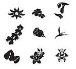 Nature,Plant,Flower,Orchid,Leaf,Digitally Generated Image,Silhouette,South,Hibiscus,Black Color,Computer Graphic,Coconut Palm Tree,Frangipani,Cocktail,Set,Vector