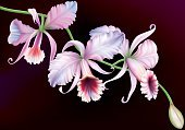 Plant,Petal,Bunch,Exoticism,Bud,Flower Head,Blossoming,Tropical Climate,Orchid,Twig,Flower,Branch,Cattleya,Tropical Flower